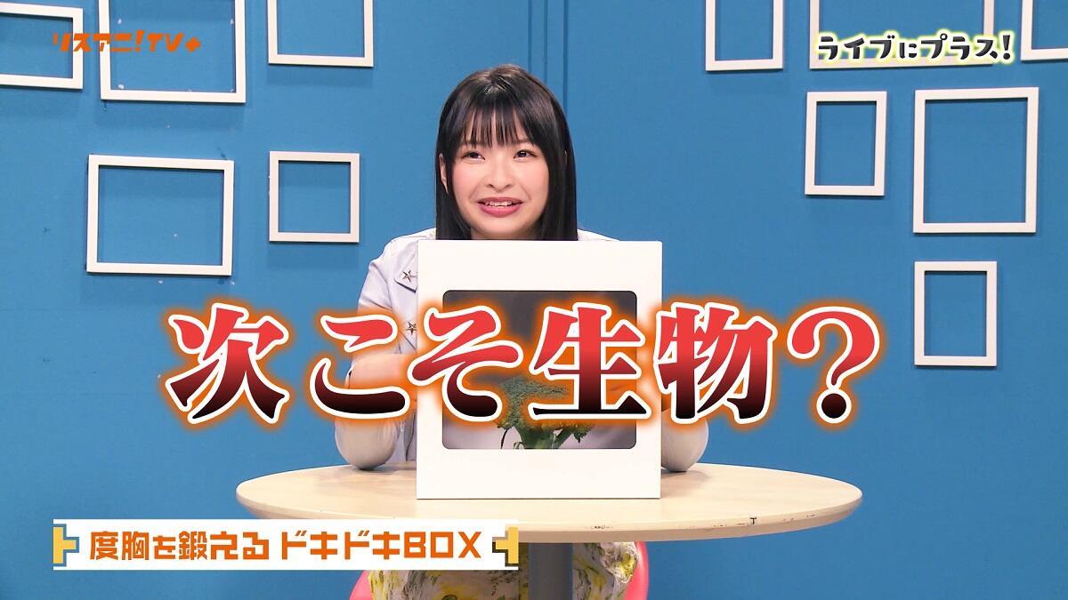 """【ネタバレ】halcaが""""ドキドキBOX""""に挑戦!「めっちゃ怖いです!」"""